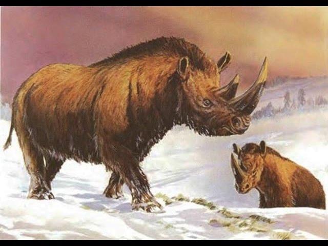 Todo sobre el Rinoceronte Lanudo | Enciclopedia sobre Dinosaurios