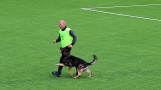 NIAK 2017 S  Cnossen PABLO VAN HAMERSSLAG Obedience 87 P