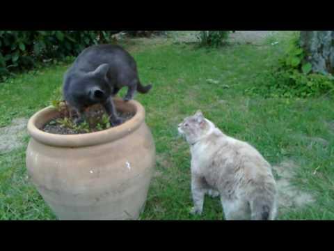 Bonheurs de chats dans le jardin