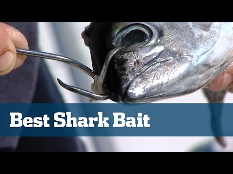 Florida Sport Fishing TV - Pro's Tip How To Butterfly Bonito Best Shark Bait