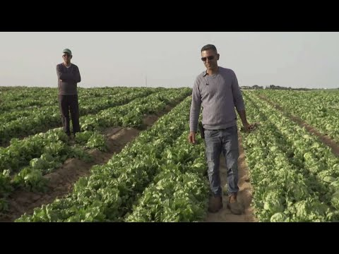 חקלאות קורונה: השדות מלאים, אבל קונים - אין
