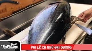 Cách Người Nhật Phi Lê Cá Ngừ Đại Dương (nhanh - gọn - sạch sẽ)