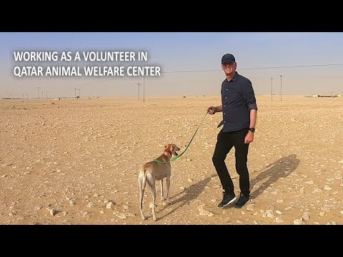 Working as Volunteer in a Dog Shelter