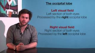VCE Psychology - The Occipital Lobe