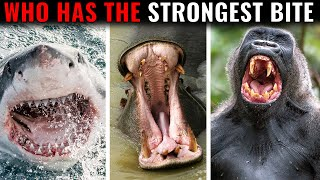 Animals With The Strongest Bites