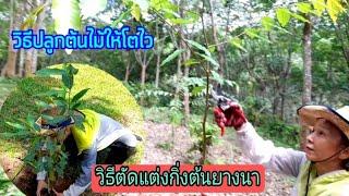 วิธีปลูกต้นไม้ให้ติดง่ายโตไว‼️วิธีตัดแต่งกิ่งต้นไม้! วิธีดูแลต้นไม้เศรษฐกิจให้ลำต้นใหญ่และสูง‼