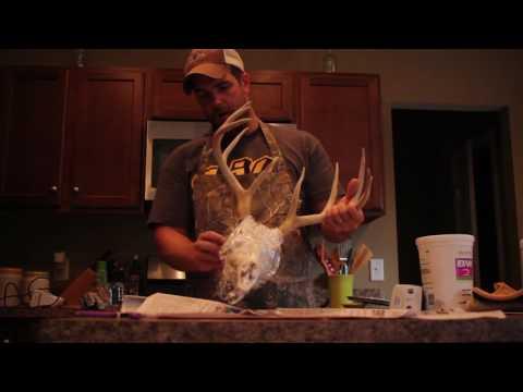 How to European mount an old deer skull.