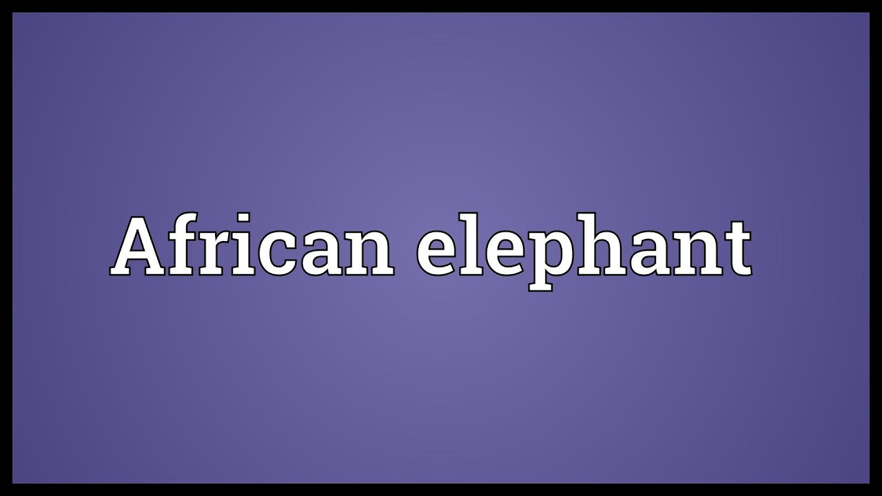 African elephant meaning youtube african elephant meaning biocorpaavc Image collections