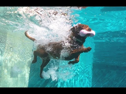 TOBY THE DIVING DOG OF MIAMI