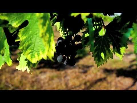 Duchman Family Winery - Best Family Winery - Texas 2011