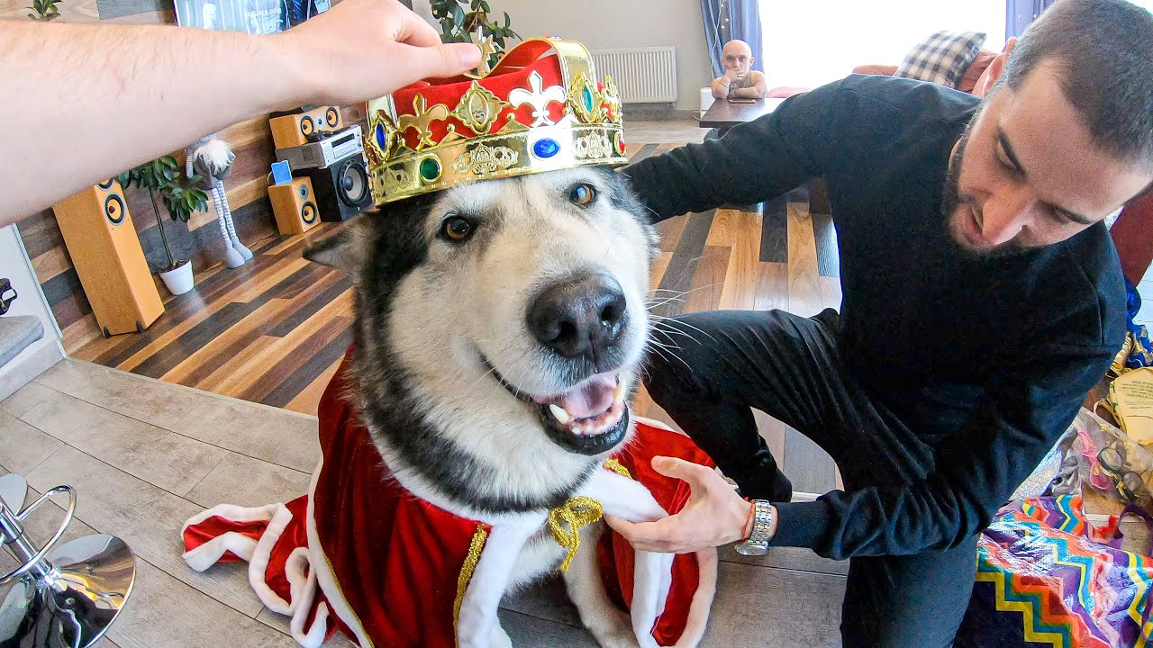 ВЭУ! Собаки в Костюмах / Как снимали клип HUSMUT — МИЛЛИОН