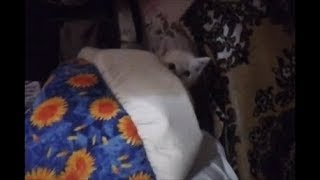Спросил у кошки можно отдать её котят? (Котёнок выглянул из засады) А кошка сказала ...