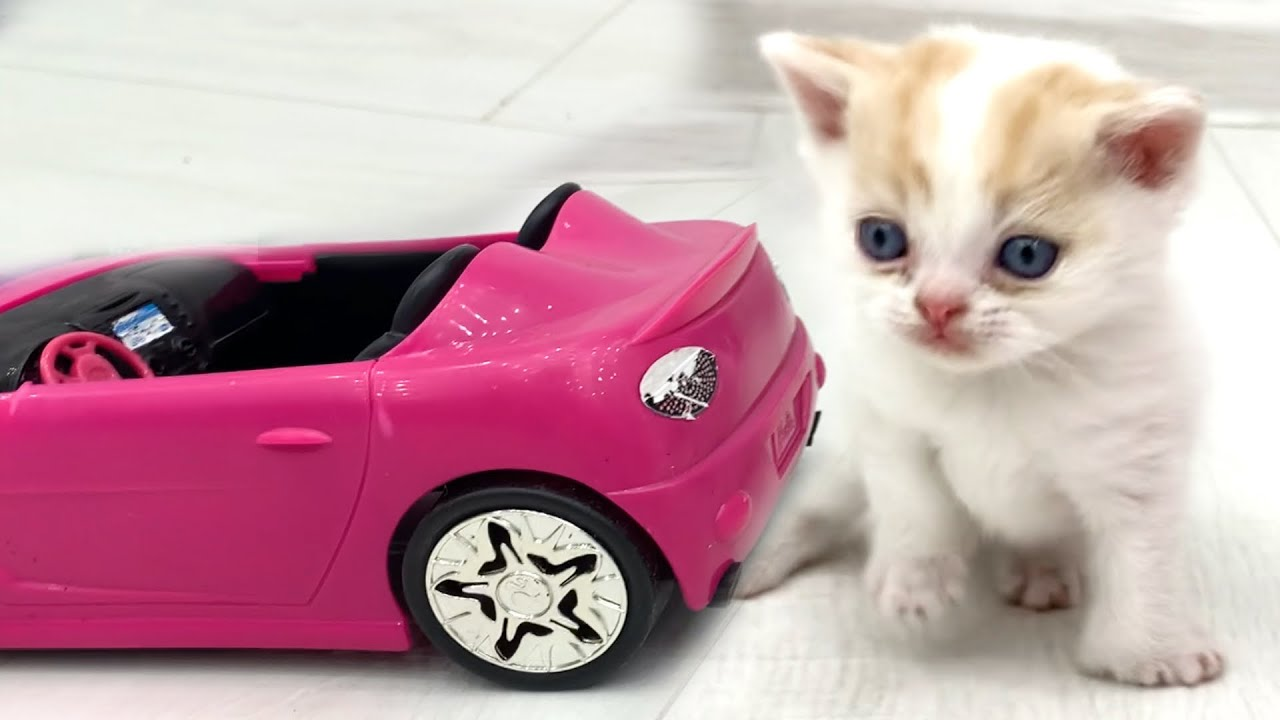 """With this car, all the kitty girls are mine"" - kitten Willie is a cute driver"