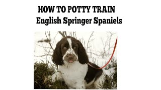How To Quickly Potty Train English Springer Spaniels