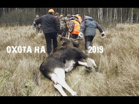 Охота на лося 2019.