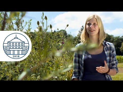 Nachwachsende Rohstoffe und Bioenergie (Bachelor) - Universität Hohenheim