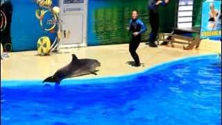 Дельфинарий Немо Анапа - 2(Окончание здесь - http://www.youtube.com/watch?v=6mX2BWs4J9Y&feature=youtu.be., 2012-07-06T15:42:28.000Z)