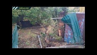 Kiev viloyati 17-yoshli halokatli hodisa qildi