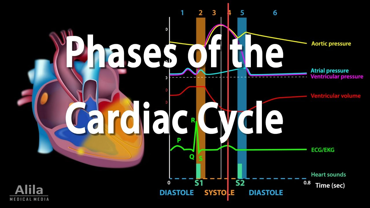 cycle of events in the heart