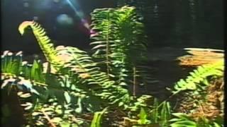 Wunderbarer Planet 06 Die großen Wälder