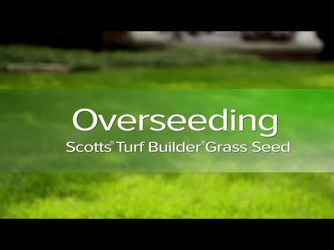 How to Overseed Your Lawn with Dr. Phil Dwyer