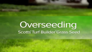 How Overseed Your Lawn Dr Phil Dwyer