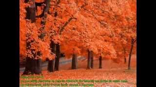 PREGADOR LUO APOCALIPSE 16 - Árvore de Bons Frutos