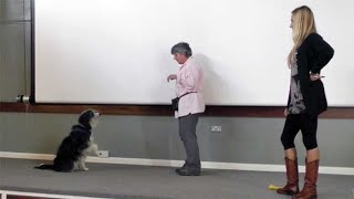 Do as I do: teaching dogs to imitate  amazing way to teach dog tricks