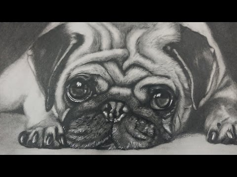 How To Draw A Pug Dog Face Step By Step FunnyDogTV