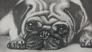 Drawing  a Pug Puppy Dog - Realistic Art