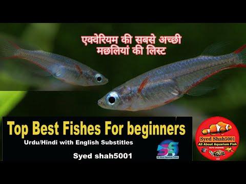 Best Aquarium Fishes For Beginners Hindi/Urdu With English Sub