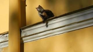 Кошка Маруська охраняет Санкт-Петербургский медико-технический колледж