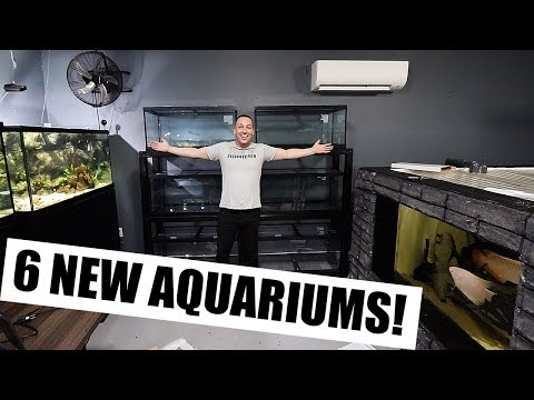 THE NEW AQUARIUMS!