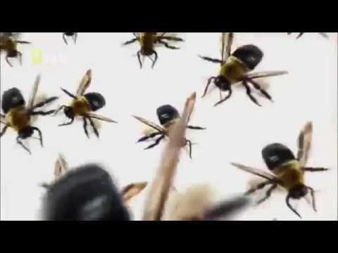 Criaturas Mortais da Austrália - (National Geographic)