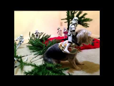 Imperial Storm troopers build a Christmas tree - Star Wars - YouTube