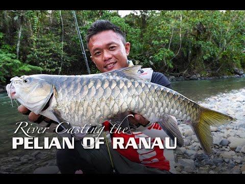 River Casting the Pelian Of Ranau, Sabah (featuring Rapala CountDown Abachi)
