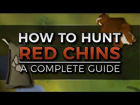 Complete Red Chinchompa Hunting Guide | Locations, Trap Setup And 3t Hunter | Oldschool Runescape