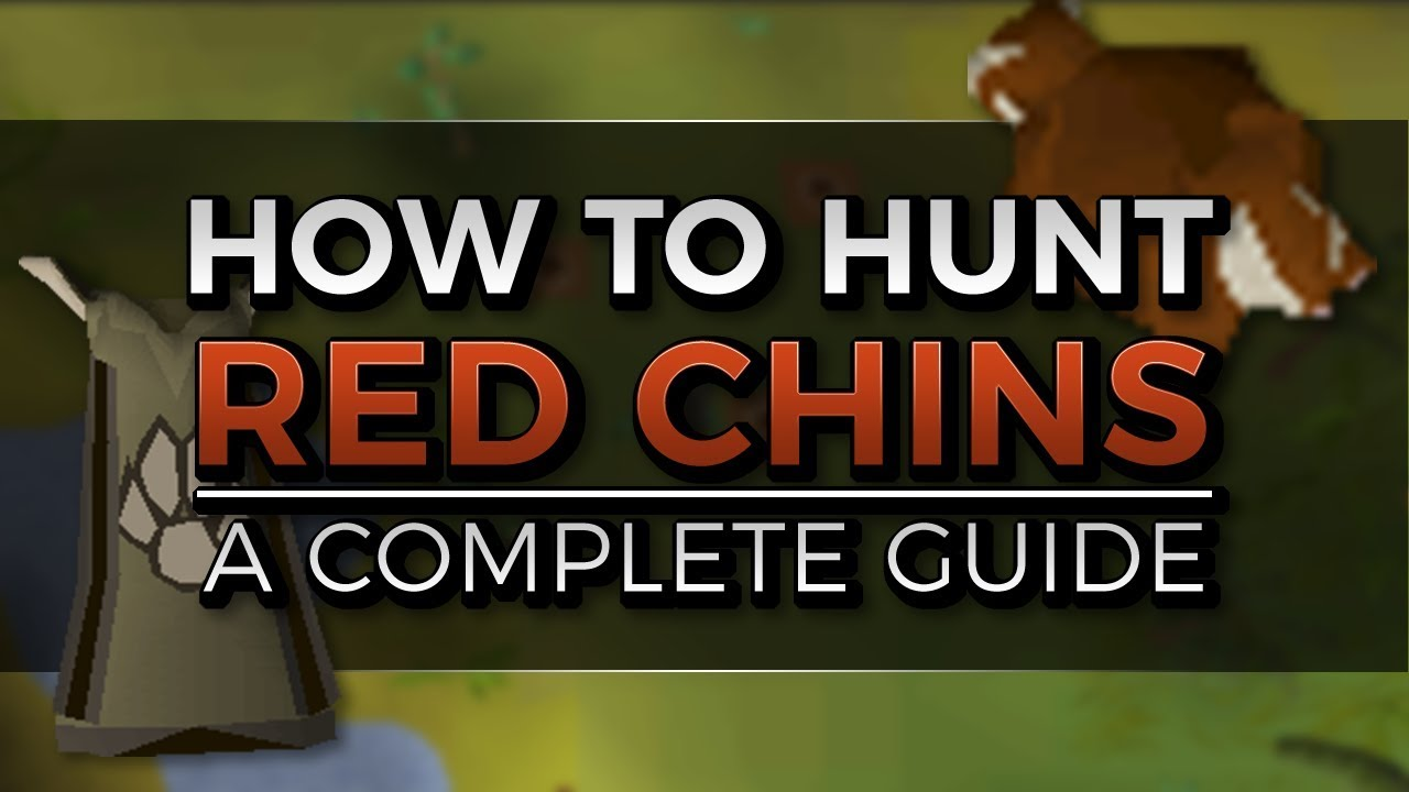 Complete Red Chinchompa Hunting Guide   Locations, Trap setup and 3t Hunter    Oldschool Runescape