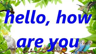 HELLO, HOW ARE YOU, budgie how to training parrot and Budger...
