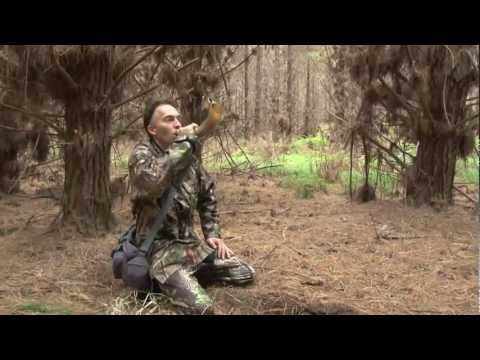 TV WiLD episode seven - The Fallow deer of Woodhill Forest