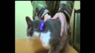 В кишиневской тюрьме кот стал преступником
