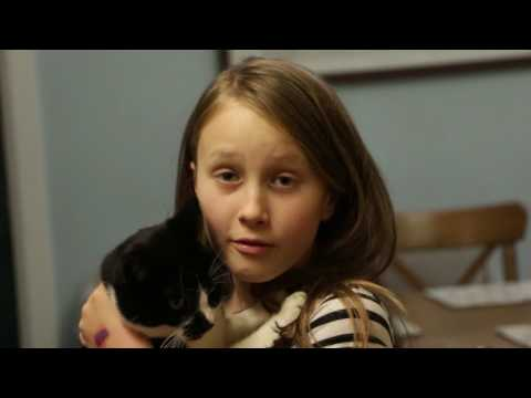 The Secret Life Of Cats Documentary