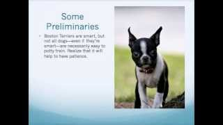 *How to Potty Train Your Boston Terrier Puppy FABULOUS!!