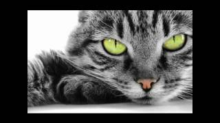 Ах,эта прекрасная кошачья жизнь