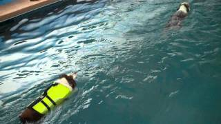 Come Swim, Jump & Run With Your Dog At Rummy's Beach Club In Spring, Texas -- Where Dogs Rule!