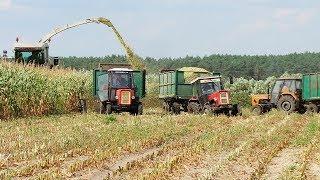 W suszy też się można zakopać! Szalone Ursusy i Claas Jaguar 880 w kukurydzy