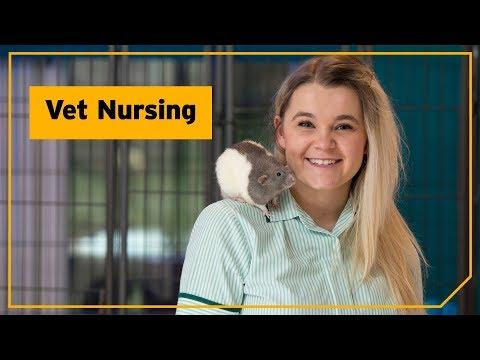 Edinburgh Napier University | SAS | Vet Nursing