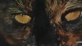 Torture Garden (1967) TRAILER
