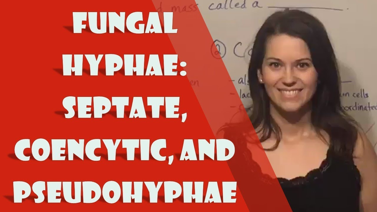 Fungal Hyphae: Septate, Coencytic, and Pseudohyphae