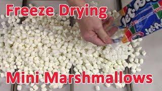 Freeze Drying Mini Marshmallows